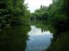 Birches Lake meer 06