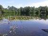 Etang du Heron het meer 05.jpg