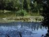 Orchard Lake meer  01