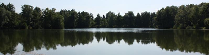foto hoofdpagina heron